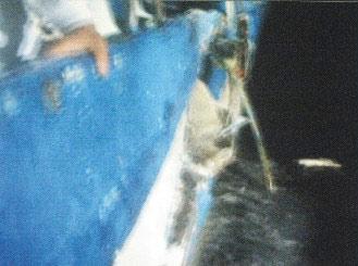 """台湾海钓船""""联合号""""被撞画面昨天(12日)曝光,画面中清楚可见被日本舰艇撞破的船身。(图:台湾《联合报》)"""