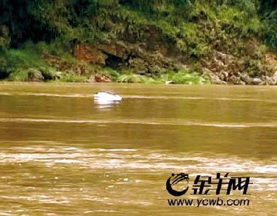 DV摄下的中华白海豚