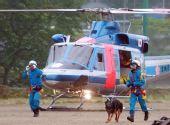 组图:搜救犬增援日本地震灾区