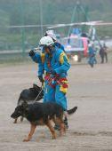 (国际)(4)搜救犬增援日本地震灾区