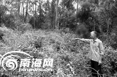 阿三出事在一个很茂密的树林里,14日被村里人发现。刘孙谋 摄