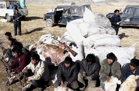 可可西里破获最大盗猎案 700只藏羚羊遭杀