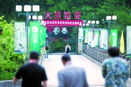 位于深山中的卧龙大熊猫苑,虽然地处偏远,但由于声名远播,来此参观的中外游客络绎不绝。