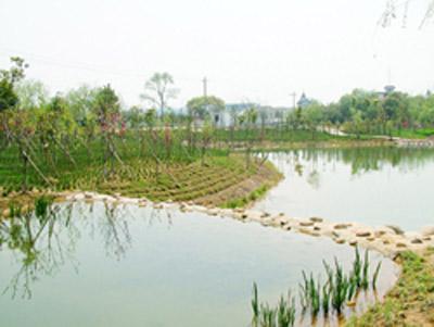 皋城村生态环境