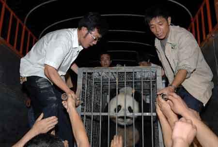 6月24日,运送大熊猫的卡车抵达雅安碧峰峡基地。
