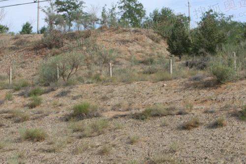 接近沙漠地带的植物
