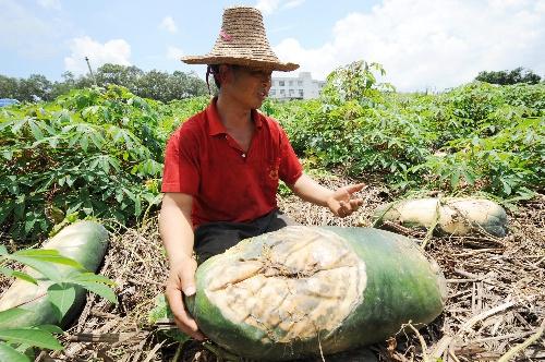 2008年北京奥运会_2008年北京残奥会_2008年农民收入
