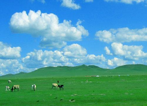 敕勒歌中的呼和浩特草原风光(资料图)-中国乳都 呼和浩特市特色名片