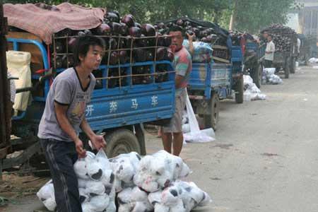 留村菜农在路边排队出售茄子