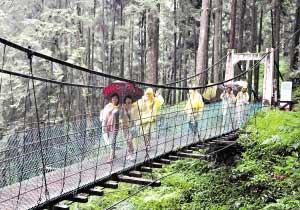 昨天,在烟雨迷蒙中,广东游客穿过阿里山的吊桥。