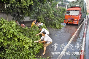 行道树被吹倒,司机自发清障