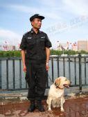 组图:传递长春结束仪式现场带警犬的安保人员
