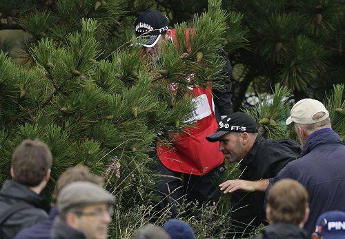 图文:英国公开赛第二日比赛 梅迪特树丛里找球