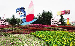 奥运花卉景观