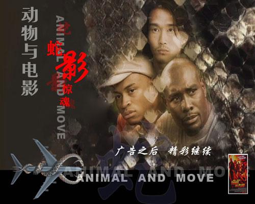 自然密码-- 动物与电影