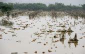 组图:湖北襄樊特大暴雨致208万多人受灾5人死