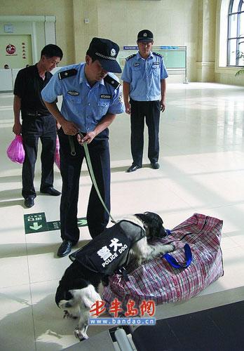 警犬检查可疑包裹。