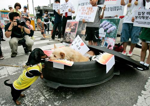 韩国动物保护成员呼吁勿吃狗肉