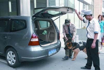 """10条防爆犬已经""""把守""""环球金融中心门口,24小时轮流执勤,对进出车辆进行检查。 徐网林 现场图片"""