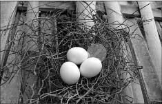 鸟巢不大,直径只有10多厘米,全部由细钢丝互相缠绕做成