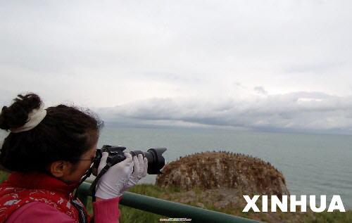 """夏到高原游鸟岛 这是栖息在鸬鹚岛上的鸟类(8月11日摄)。进入8月,青海高原气候清爽宜人,位于青海湖西北素有""""鸟类王国""""之称的鸟岛,吸引了众多国内外游客前来避暑观光。 新华社记者 嘎玛 摄"""