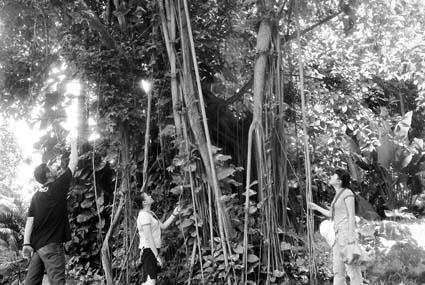 海口的公园中随处可见原始热带雨林中才有的植物奇观。