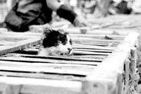 小猫从笼子里探出头呼吸。《青年时报》供图
