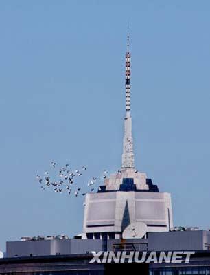 8月31日,北京秋高气爽,一群鸽子在空中自由飞翔。 新华社记者 张燕辉 摄