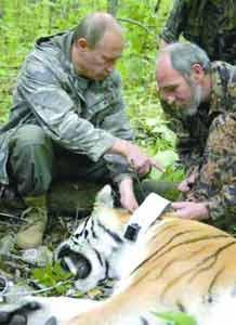 在制服老虎后,普京帮助科学家进行测量工作