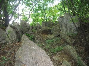 图为南山天然奇石群一角。