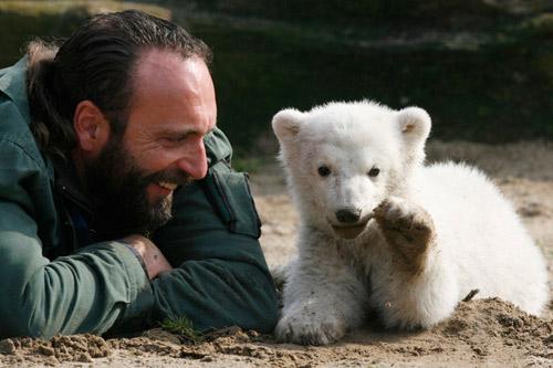 """9月22日,柏林,曾经哺育过柏林动物园桃子明星--北极熊""""克努特""""的小班动物猴子小教案分社会图片"""