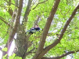猫上树顶下不来