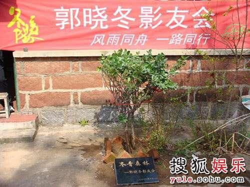 """""""冬青""""在郭晓冬的旧居植树"""
