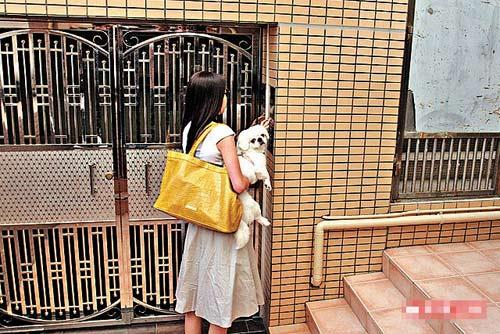 与郭富城狂欢33小时的熊黛林,昨日上午抱爱犬返家时满面倦容