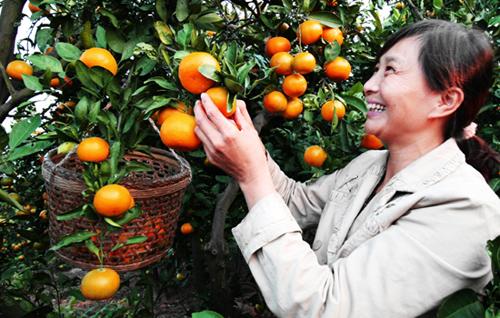 果园之中,既能享受丰收的喜悦,又能释放你的心情,绝对是今年秋天出游图片