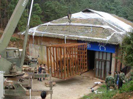 云南野生动物园戒毒象启程回西双版纳州(图)
