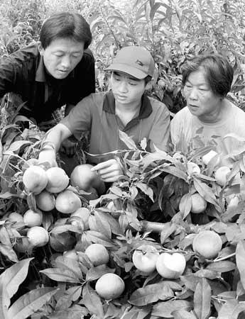 大学生志愿者高杰培在山西省夏县瑶峰镇大辛庄村向村民传授桃树的管理技术。薛俊摄