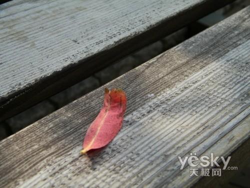 镜头里的秋 和柯达Z1015一起看风景