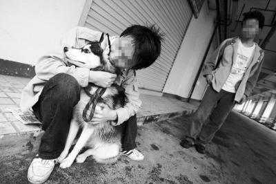 """昨日,石桥铺,付先生与雪橇犬""""喜喜"""" 记者 刘嵩 摄"""
