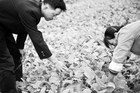 今后,郑州市民也可以到农村租地种了。新华社/图
