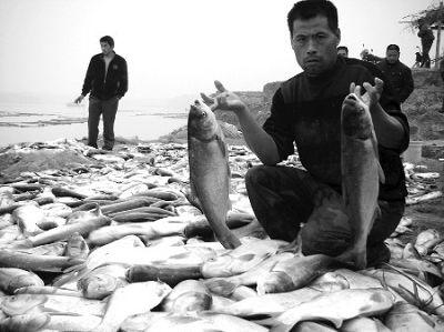 渔民和满地的死鱼。