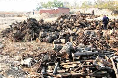 10天前,昌平区流村镇南流村村东的预留宅基地处陆续被盖起羊圈,空地处也被乱石填占。这是南流村的村民在圈地。