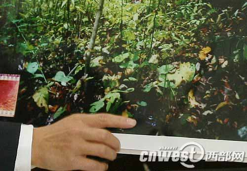 检察员指出胶片虎照上可以看到数码相机被放置在地上