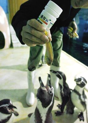 动物园的小企鹅图