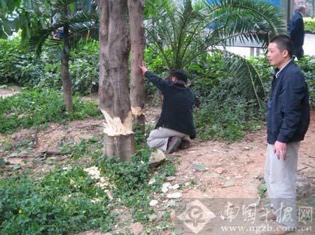 砍树动作手绘图