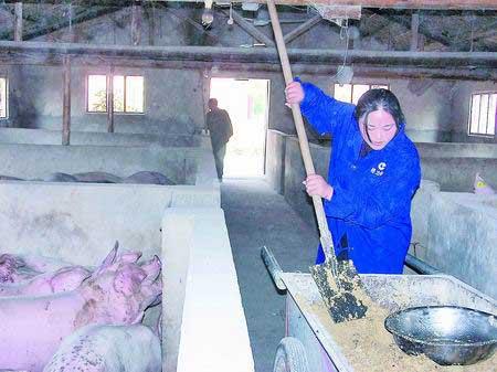 与村民李霞合办猪场