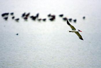 米埔自然保护区