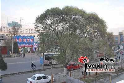 伊宁市的街面上见不到一丝冬雪(本网记者 王霞 摄影)。