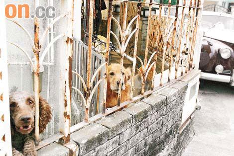 屋内四头犬只异常凶猛,少许声响亦会狂吠