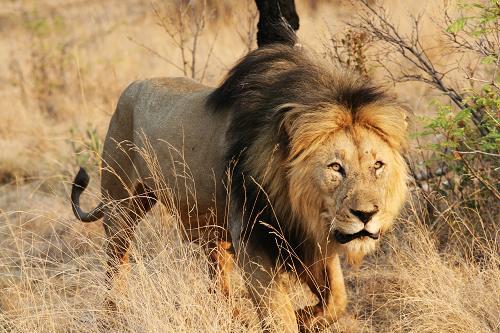 南非国家公园:野生动物天堂